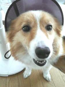 ユーノ動物病院で院長が飼っている愛犬「かな」