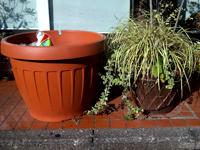 綾瀬市ユーノ動物病院にある植木